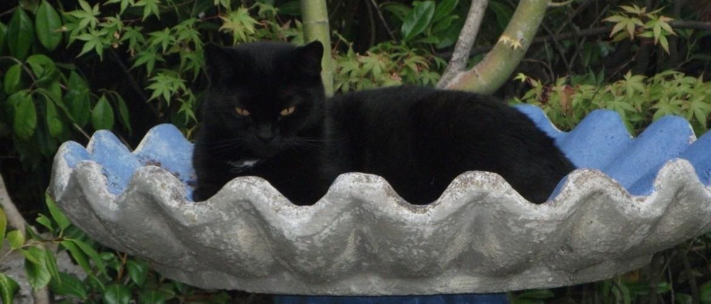 Cat in a birdbath