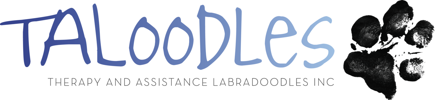 Taloodles Therapy and Assistance Labradoodles