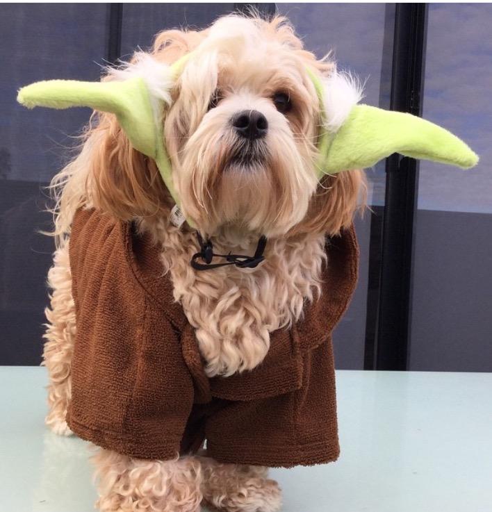 Jed as Yoda