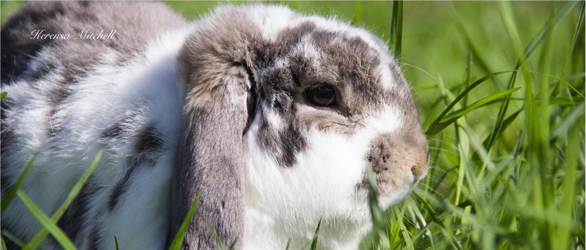 Kerensa Mitchell - Bunny Rabbit