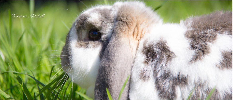 Kerensa Mitchell - Bunny