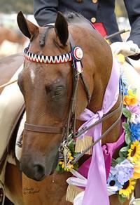 Pre-Royal Horse Show