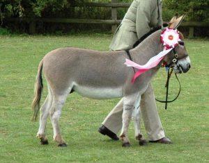 Micro Miniature Donkey
