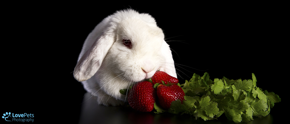 White Rabbit with Strawberries