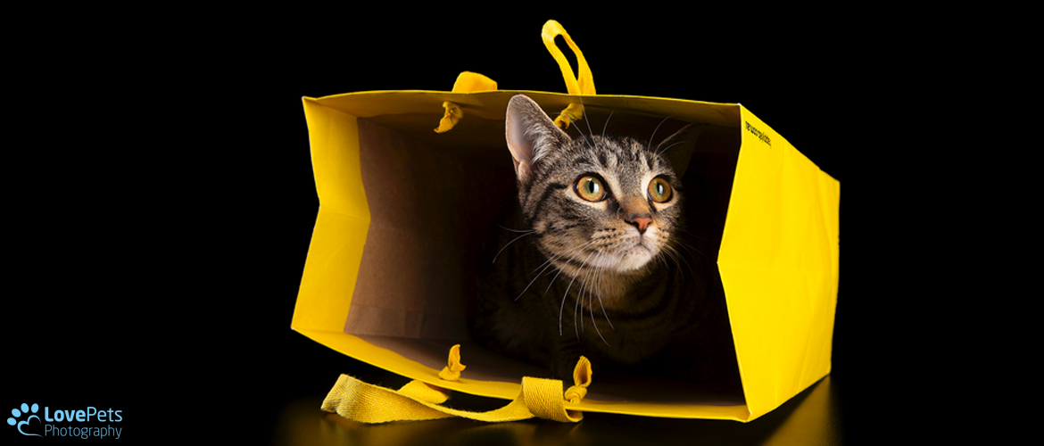 Tabby Cat in a Yellow Bag