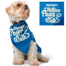 Petcationz RSPCA Million Paws Walk Gold Coast Queensland
