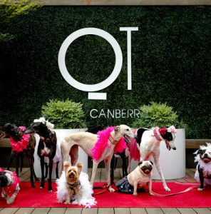Petcationz Barkfest at QT Canberra ACT