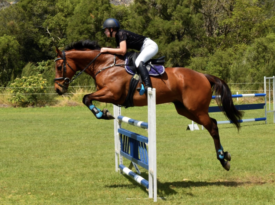 Petcationz Gatton World Cup Show Jumping Championships