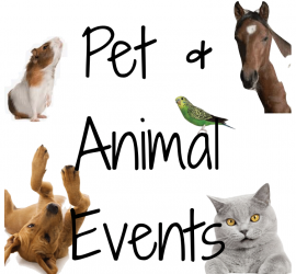 Petcationz pet and animal events