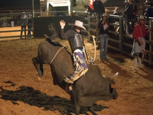 Petcationz Quilpie and district show and Rodeo 2020