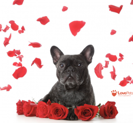 Petcationz Valentines Day Love Pets Photography